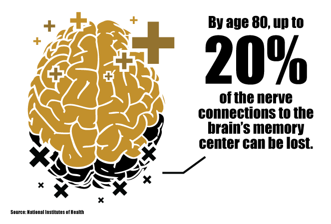 By age 80, up to 20% of the nerve connections to the brain's memory center can be lost.